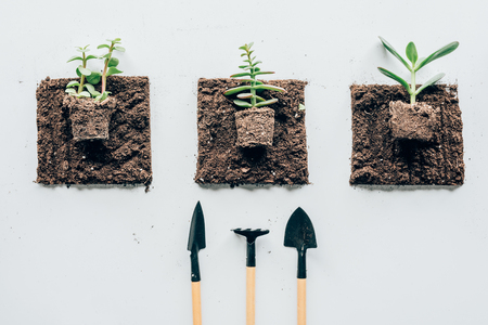 top view of beautiful green plants in soil and gardening tools Reklamní fotografie