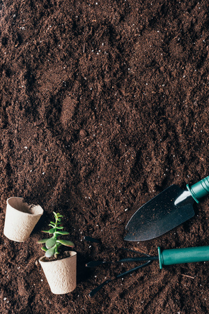 top view of gardening tools, green plant and flower pots