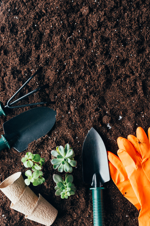 top view of green plants, gardening tools, flower pots and rubber gloves 版權商用圖片