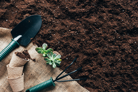 top view of gardening tools, flower pots and green plants on sackcloth