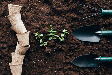 top view of green plants with roots, empty pots and gardening tools Banco de Imagens