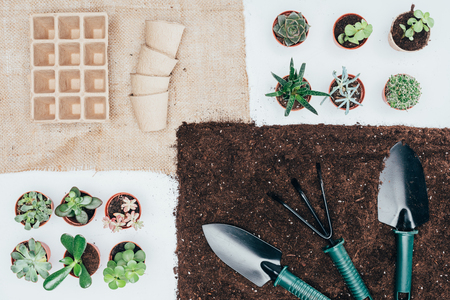 top view of green potted plants, empty pots, soil and gardening tools