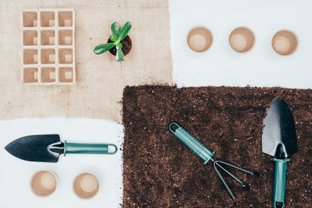 top view of green potted plant, empty pots, soil and gardening tools