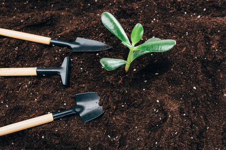 close-up view of beautiful green plants and gardening tools