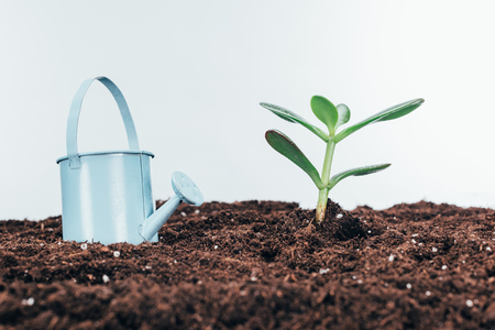 close-up view of green plants in soil and watering pot