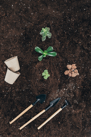 beautiful green plants in soil, flower pots and gardening tools