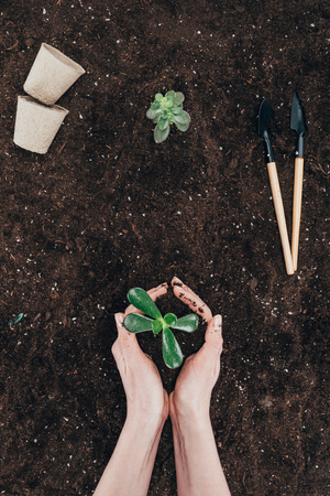 person holding beautiful green plant in soil Stok Fotoğraf - 97384716