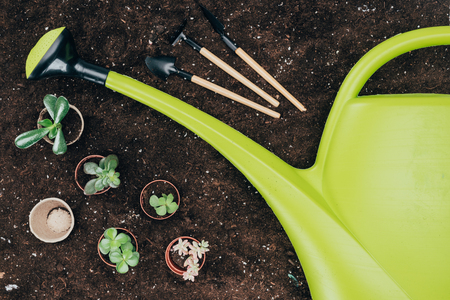 beautiful green potted plants, gardening tools and big plastic watering can on soil Banco de Imagens