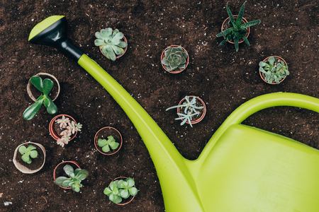 beautiful green potted plants and big plastic watering can on soil