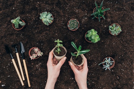 hands holding green potted plants above soil and gardening tools 版權商用圖片