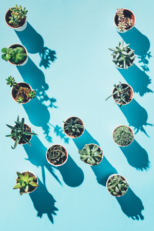 top view of letter W made from green potted plants Stock Photo