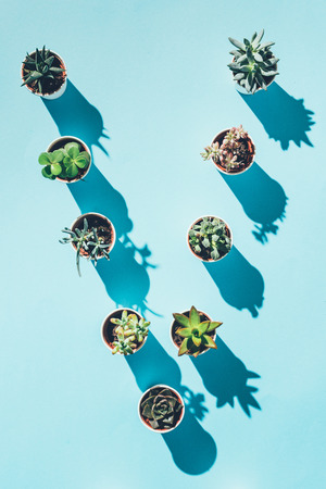 top view of letter V made from green potted plants on blue  Stock Photo