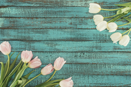 tender blooming tulips over green wooden background with copy space Zdjęcie Seryjne