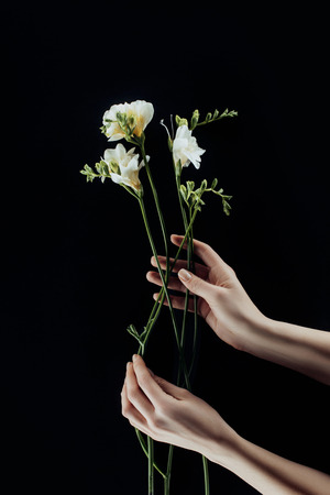 cropped image of female hands with freesia flowers isolated on black Zdjęcie Seryjne