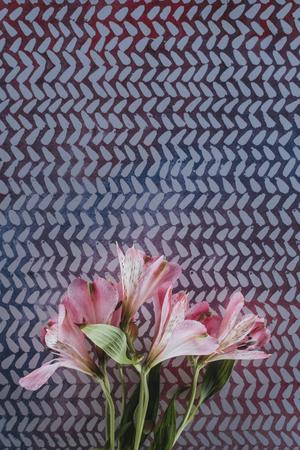 blooming alstroemeria flowers over spotted background Reklamní fotografie