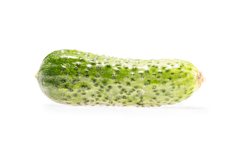 single ripe fresh organic cucumber isolated on white