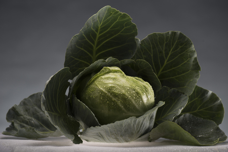fresh ripe healthy cabbage covered in water drops isolated on grey