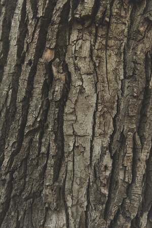 close-up view of weathered tree bark texture