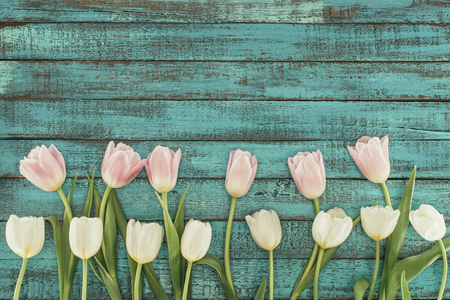tender blooming tulips over green wooden background with copy space Stock Photo