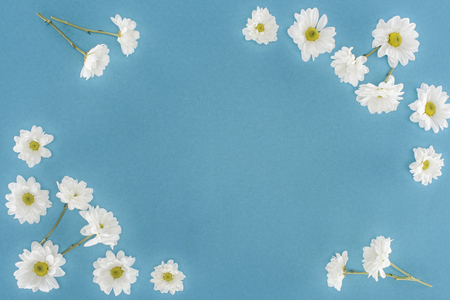 white chrysanthemum flowers frame isolated on blue