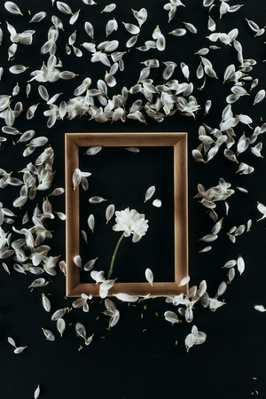 top view of wooden frame with daisy and petals isolated on black 스톡 콘텐츠