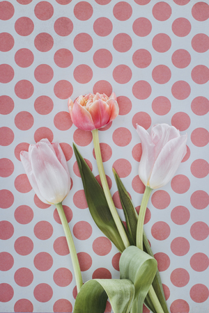 beautiful tulip flowers over spotted background Reklamní fotografie - 98756481
