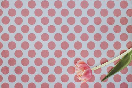 blooming tulip flower over spotted background Reklamní fotografie
