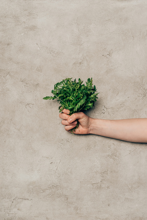 Close-up view of hand holding bunch of green arugula leaves