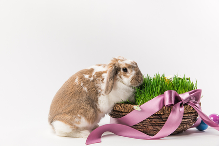 Rabbit near basket with grass bound by pink ribbon
