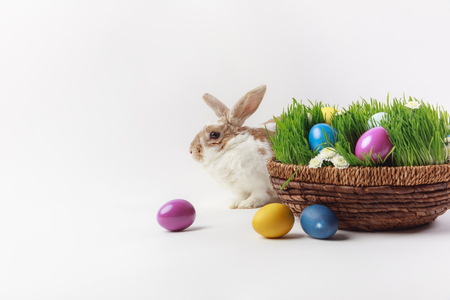 Rabbit and basket with grass and painted eggs