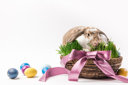 Rabbit sitting in basket bound by ribbon with painted eggs around