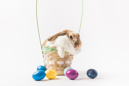Rabbit sitting in basket surrounding by painted eggs