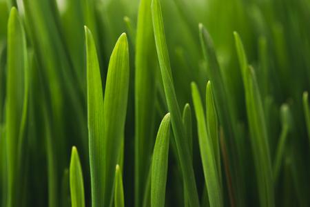 green grass stems