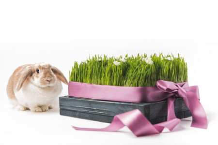 Rabbit sitting near grass with camomiles bound by ribbon Stock fotó