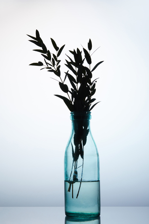 silhouette of branches in glass vase on reflective surface