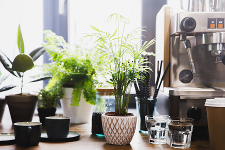 Espresso machine in coffee shop interior with cups and green plants