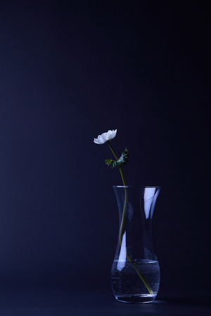 one white anemone flower in vase with water