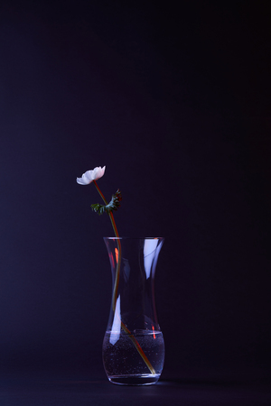 white anemone flower with green leaves in vase