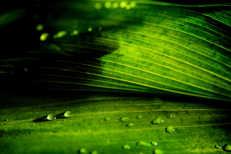 close-up view of green floral background with rain drops