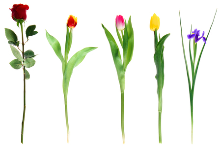beautiful various blooming flowers isolated on white  Stock Photo