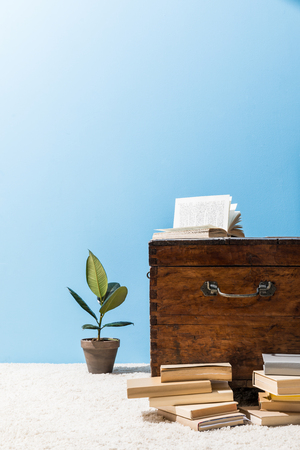 old wooden chest with books and ficus pot in front of blue wall Stock Photo