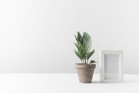 schöne grüne Topfpflanze und leerer Fotorahmen auf Weiß Standard-Bild