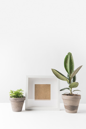 empty photo frame and green houseplants in pots on white