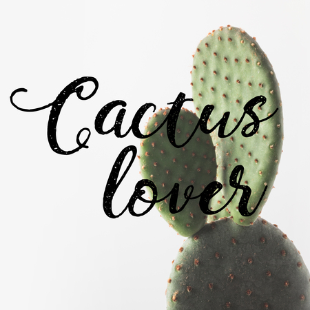 close-up view of beautiful green cactus and inscription cactus lover on white Stock Photo