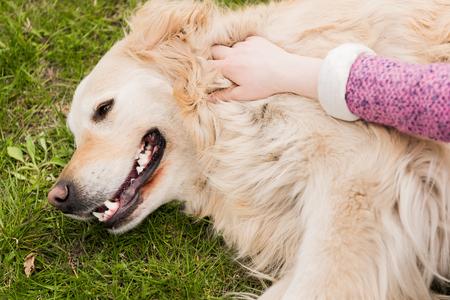 cropped shot of girl stroking cute golden retriever dog outdoors Фото со стока
