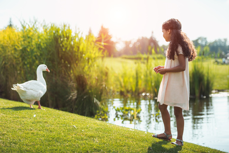 little african american girl feeding goose near lake in park with backlit Banque d'images - 102355626