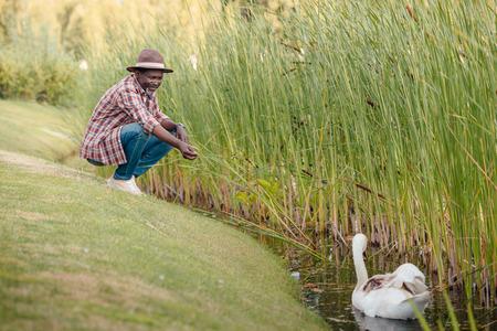 stylish senior african american man feeding white swan on lake in park