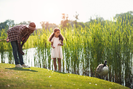 african american granddaughter and her grandfather feeding goose on pond in park Banque d'images - 102359199