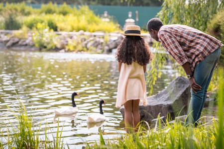 back view of african american granddaughter and her grandfather feeding geese on lake in park