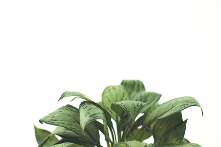 green plant, isolated on white with copy space, minimalistic style 版權商用圖片